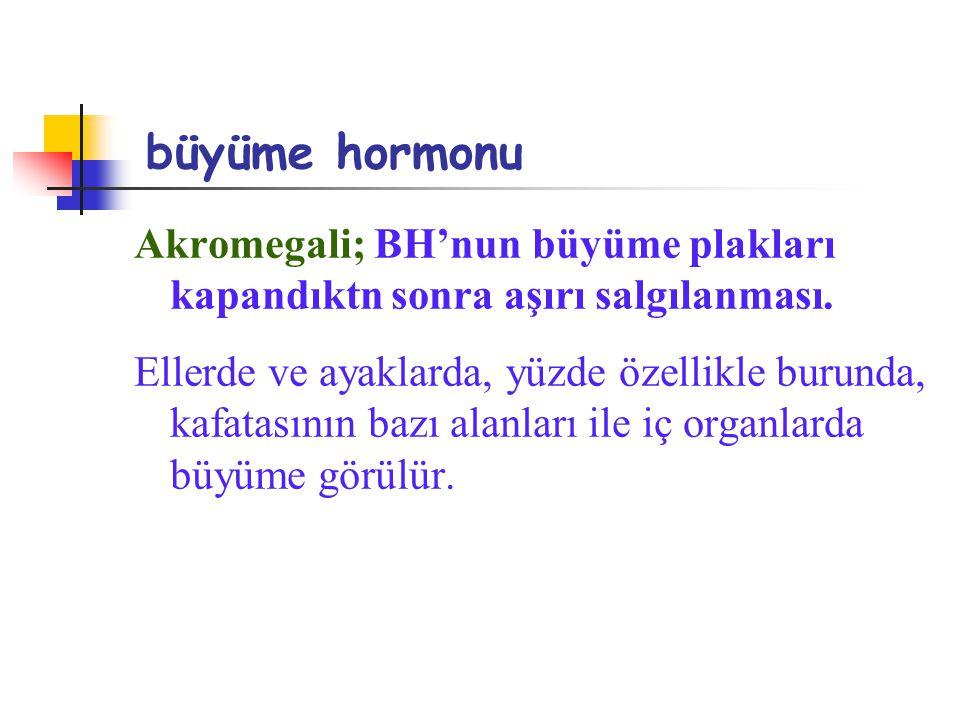 büyüme hormonu Akromegali; BH'nun büyüme plakları kapandıktn sonra aşırı salgılanması.