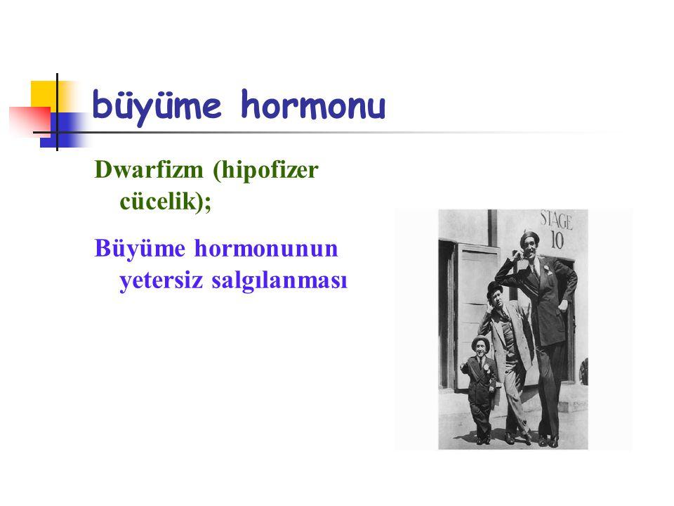 büyüme hormonu Dwarfizm (hipofizer cücelik);