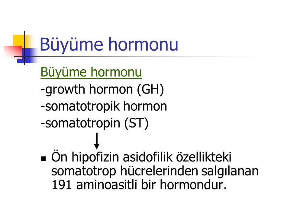 Büyüme hormonu Büyüme hormonu -growth hormon (GH) -somatotropik hormon
