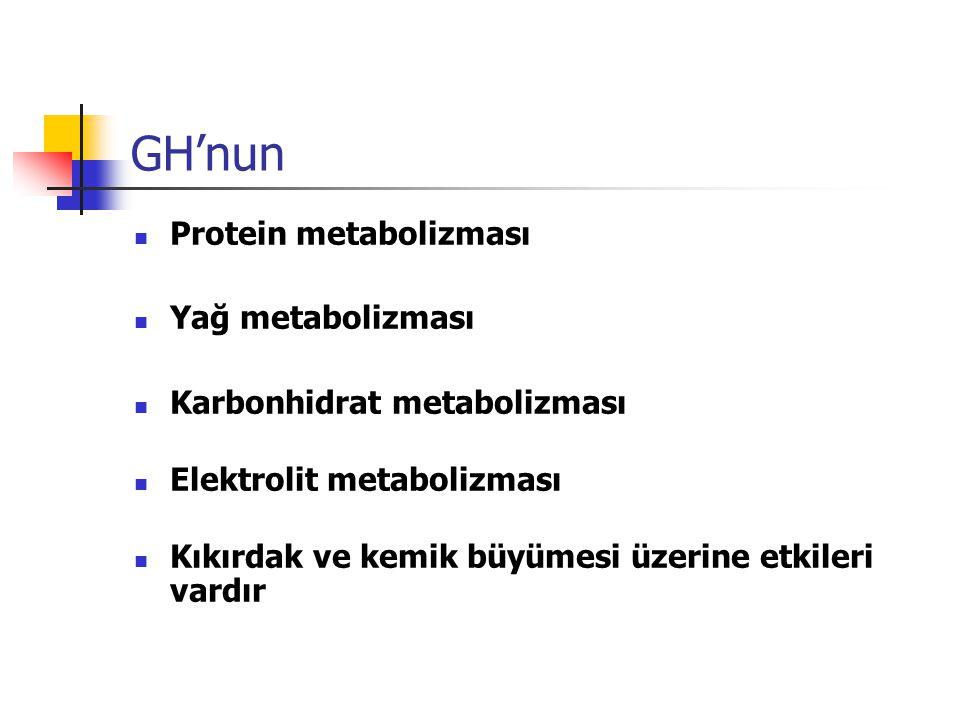 GH'nun Protein metabolizması Yağ metabolizması