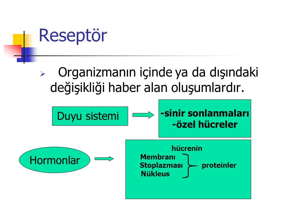 Stoplazması proteinler