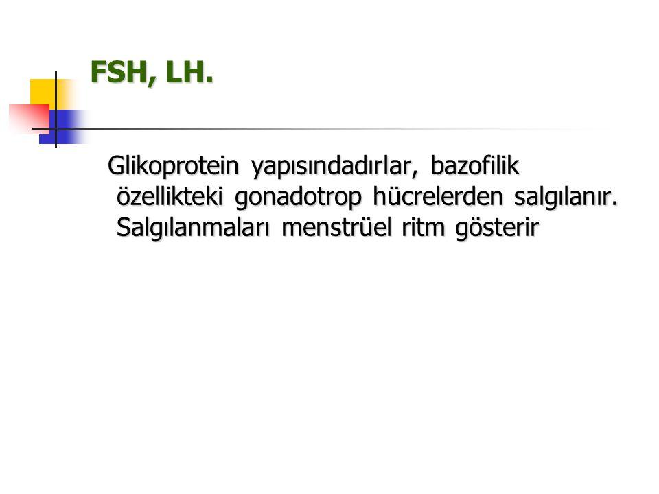 FSH, LH. Glikoprotein yapısındadırlar, bazofilik özellikteki gonadotrop hücrelerden salgılanır.