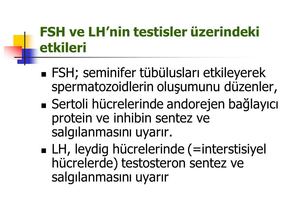 FSH ve LH'nin testisler üzerindeki etkileri