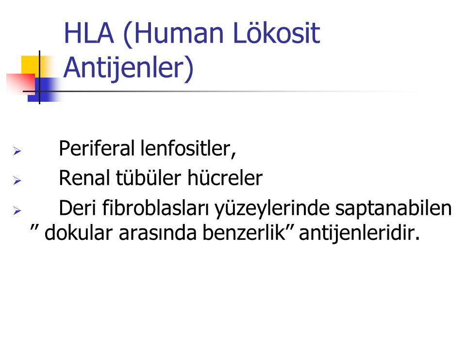 HLA (Human Lökosit Antijenler)