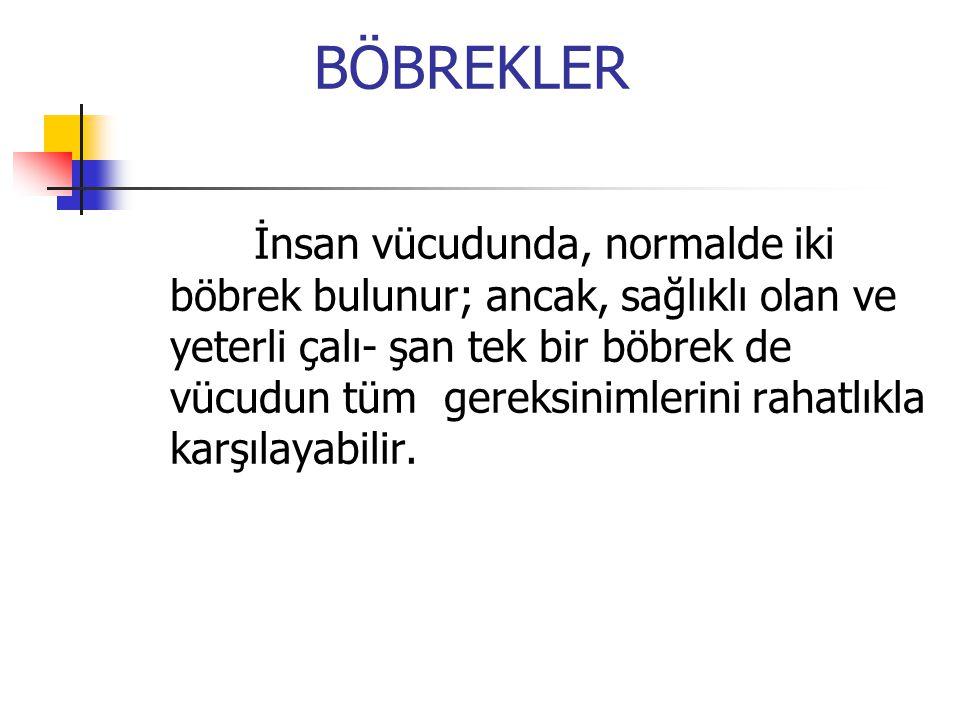 BÖBREKLER