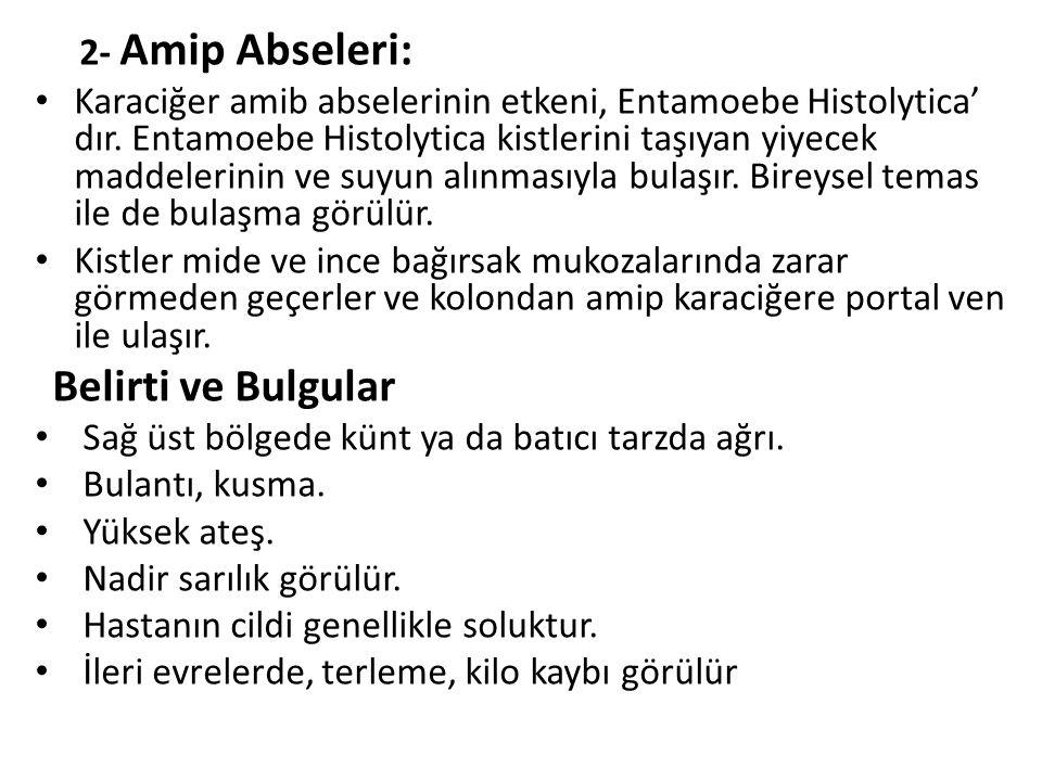 2- Amip Abseleri: