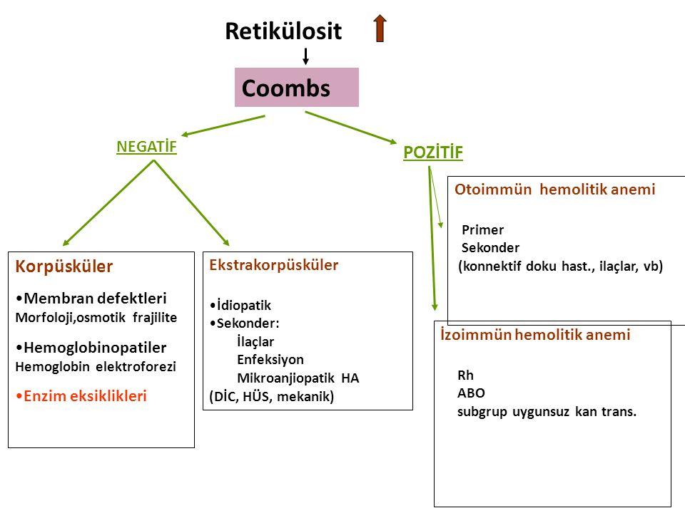 Retikülosit Coombs Korpüsküler POZİTİF NEGATİF
