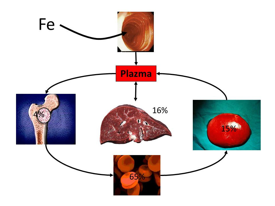 Fe Plazma. 16% 4% 15%