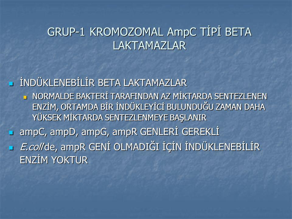 GRUP-1 KROMOZOMAL AmpC TİPİ BETA LAKTAMAZLAR