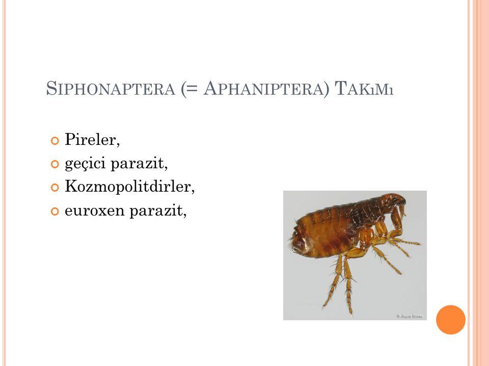 Siphonaptera (= Aphaniptera) Takımı