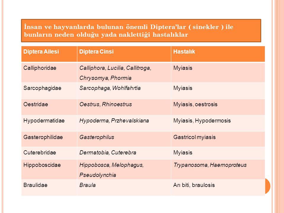 İnsan ve hayvanlarda bulunan önemli Diptera'lar ( sinekler ) ile bunların neden olduğu yada naklettiği hastalıklar