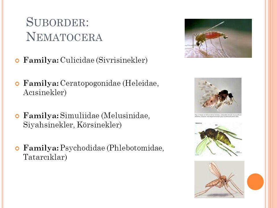Suborder: Nematocera Familya: Culicidae (Sivrisinekler)