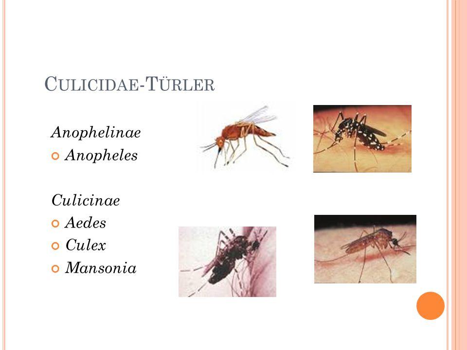 Culicidae-Türler Anophelinae Anopheles Culicinae Aedes Culex Mansonia