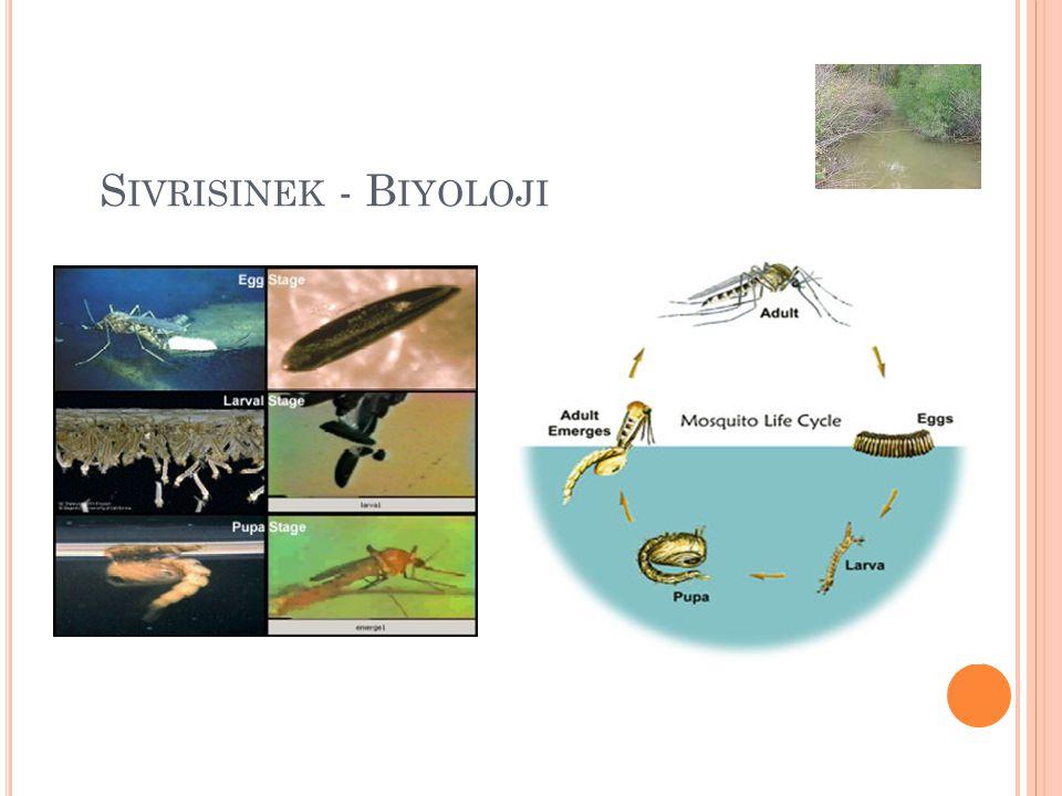 Sivrisinek - Biyoloji