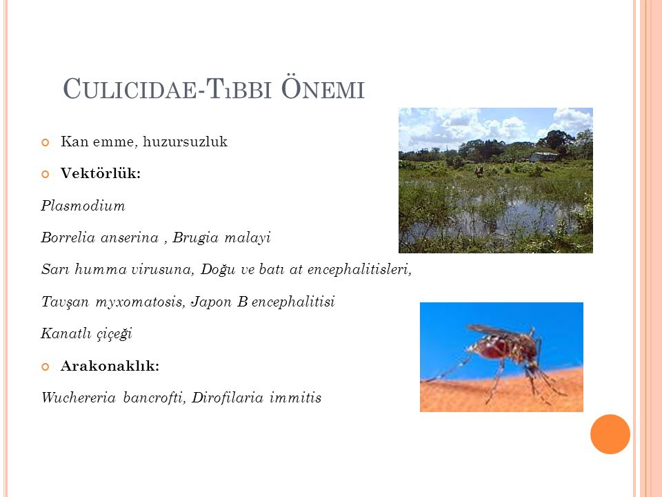 Culicidae-Tıbbi Önemi