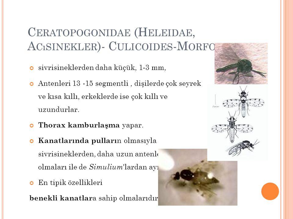 Ceratopogonidae (Heleidae, Acısinekler)- Culicoides-Morfoloji