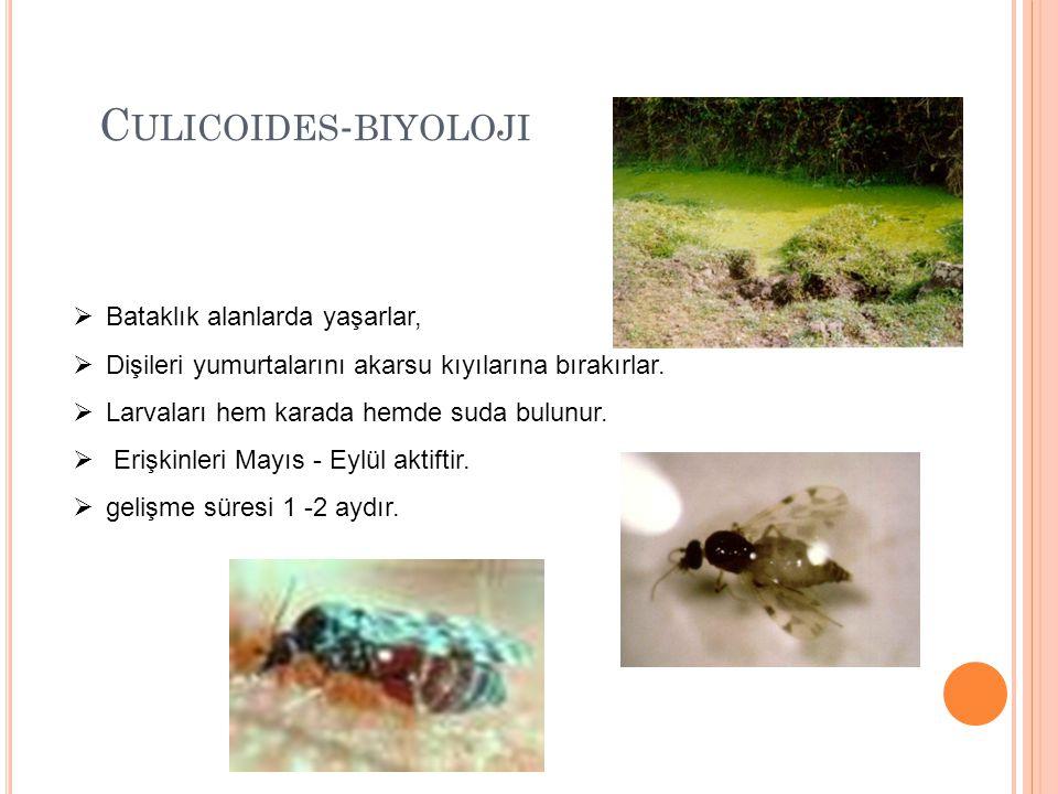 Culicoides-biyoloji Bataklık alanlarda yaşarlar,