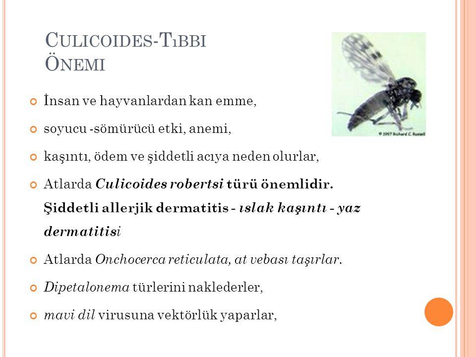 Culicoides-Tıbbi Önemi