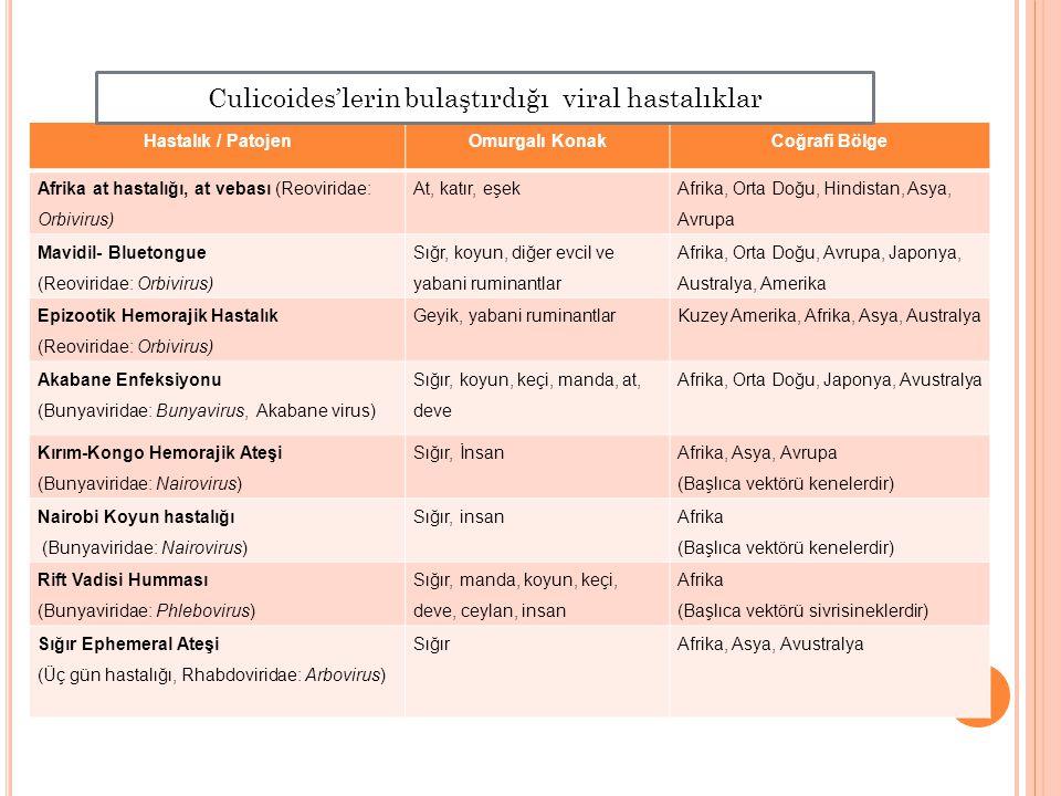 Culicoides'lerin bulaştırdığı viral hastalıklar
