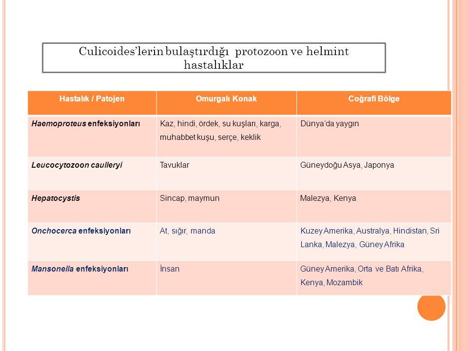 Culicoides'lerin bulaştırdığı protozoon ve helmint hastalıklar