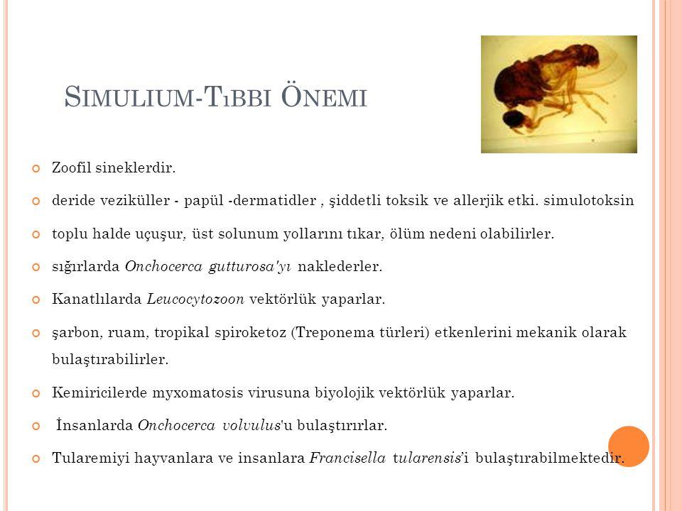 Simulium-Tıbbi Önemi Zoofil sineklerdir.