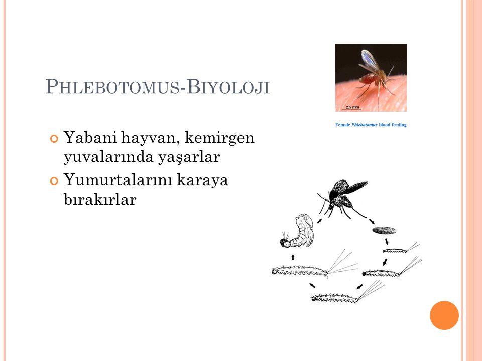 Phlebotomus-Biyoloji