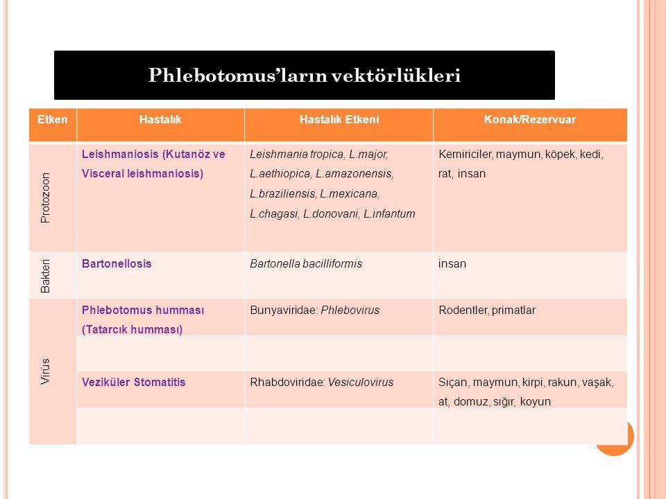 Phlebotomus'ların vektörlükleri