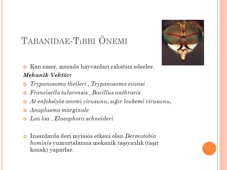 Tabanidae-Tıbbi Önemi