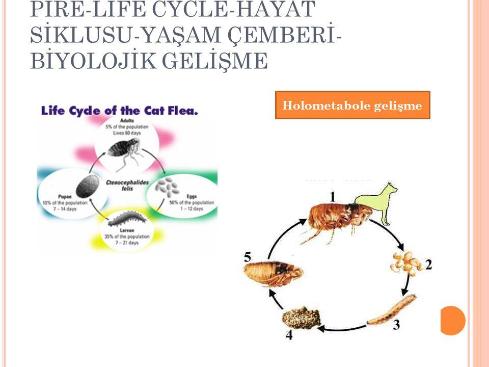 PİRE-LİFE CYCLE-HAYAT SİKLUSU-YAŞAM ÇEMBERİ-BİYOLOJİK GELİŞME