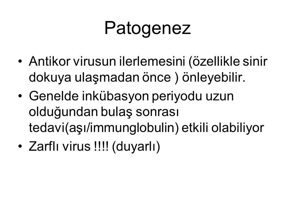 Patogenez Antikor virusun ilerlemesini (özellikle sinir dokuya ulaşmadan önce ) önleyebilir.