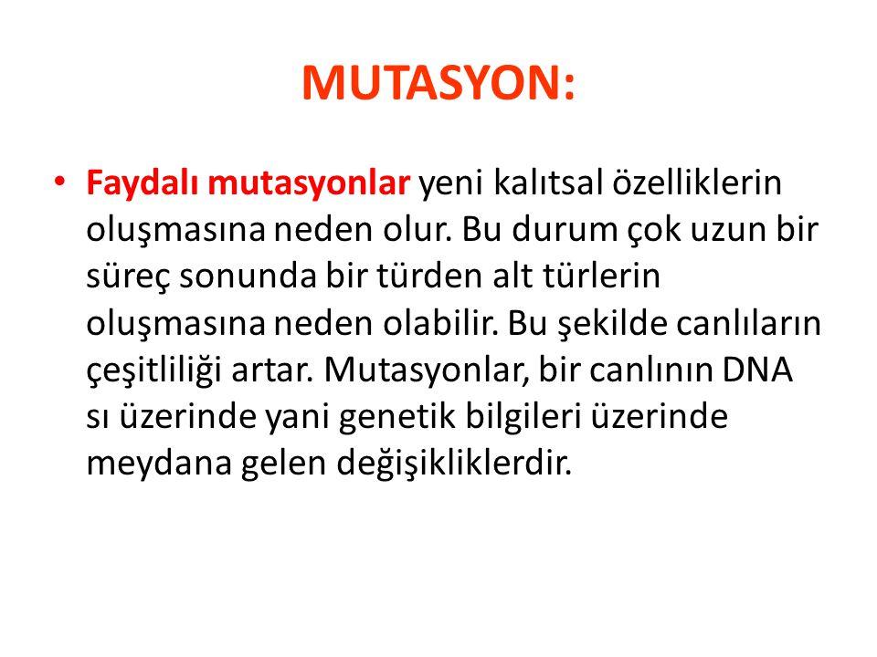 MUTASYON: