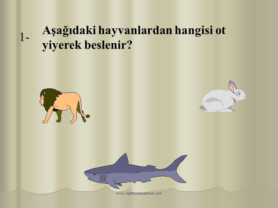 Aşağıdaki hayvanlardan hangisi ot yiyerek beslenir 1-