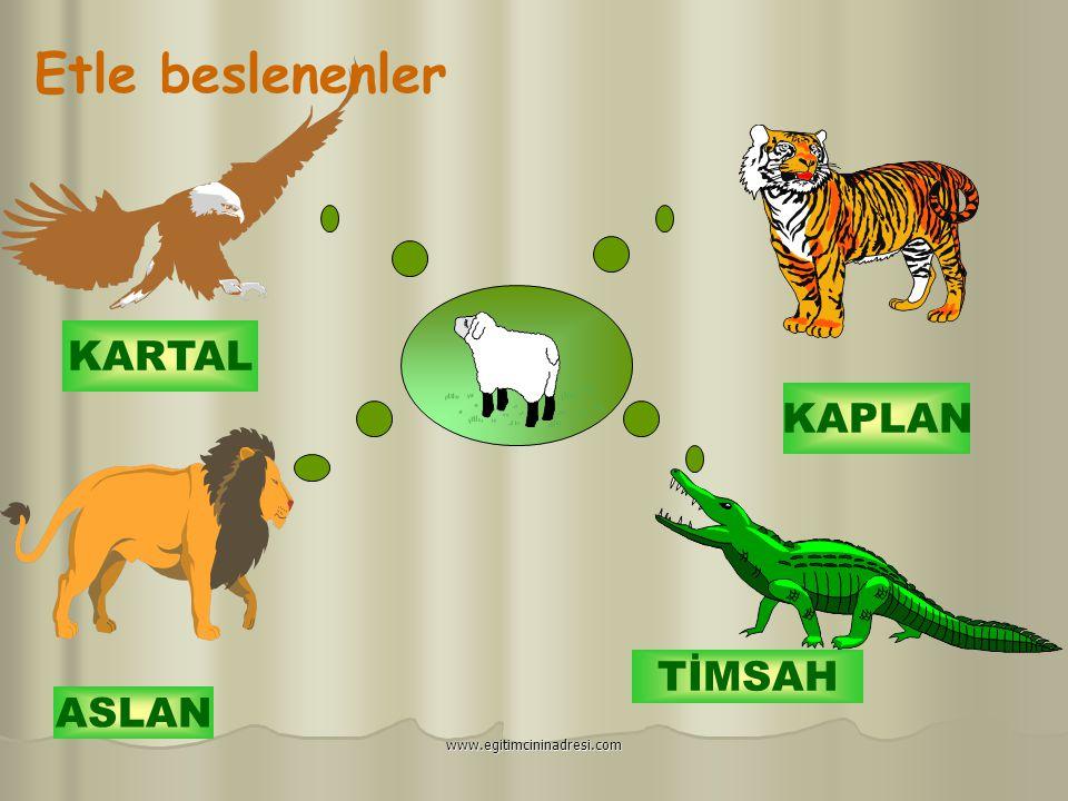 Etle beslenenler KARTAL KAPLAN TİMSAH ASLAN www.egitimcininadresi.com