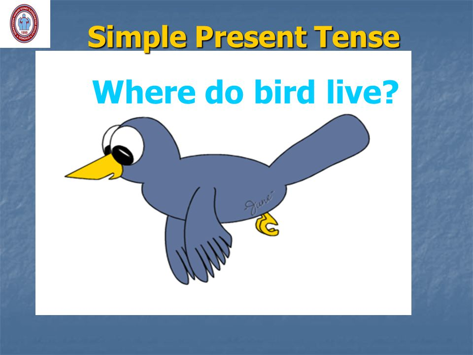 Simple Present Tense Where do bird live