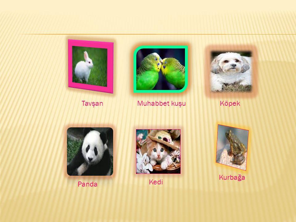 Tavşan Muhabbet kuşu Köpek Kurbağa Kedi Panda