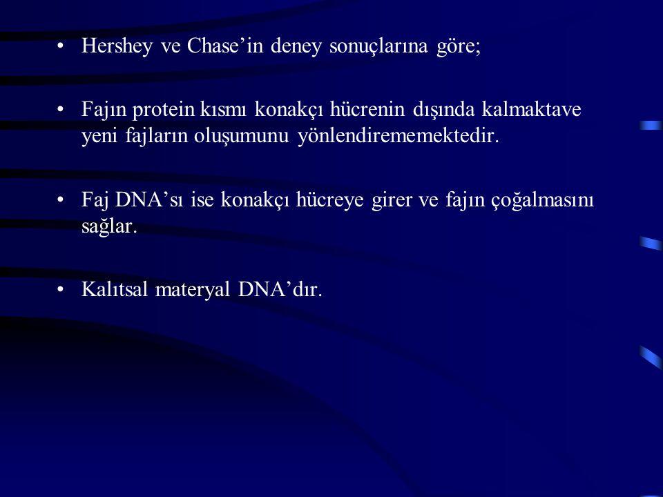 Hershey ve Chase'in deney sonuçlarına göre;
