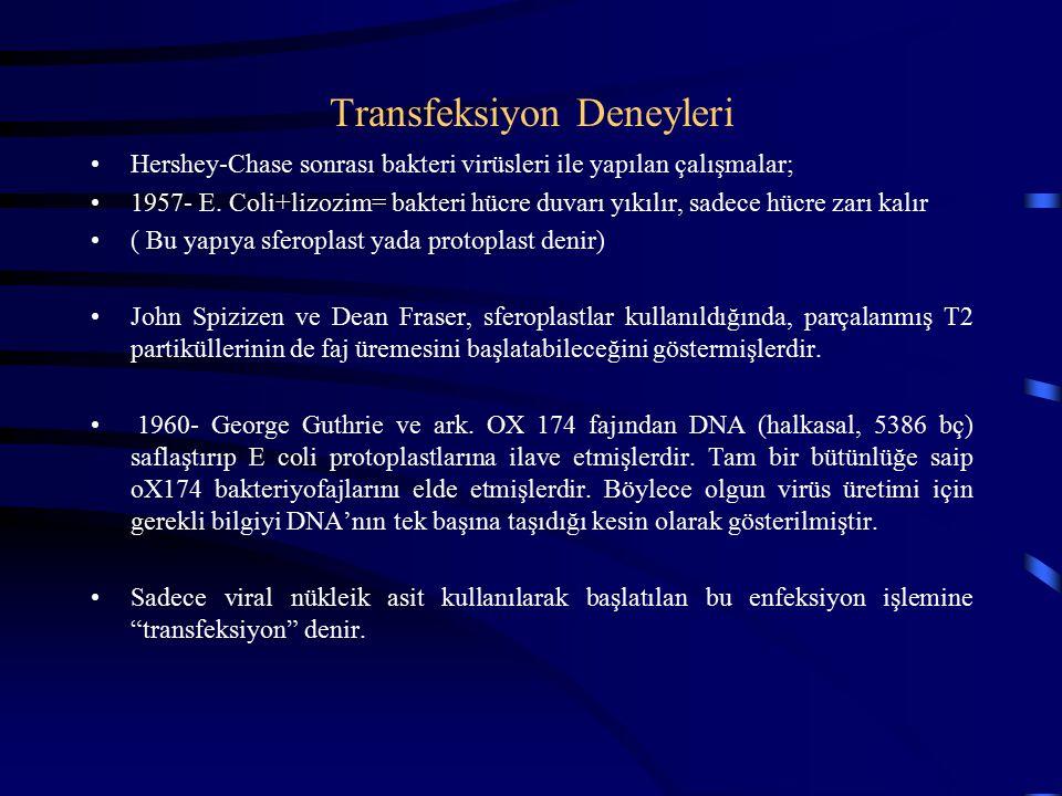 Transfeksiyon Deneyleri