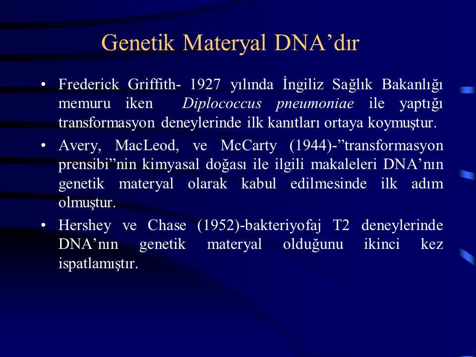 Genetik Materyal DNA'dır