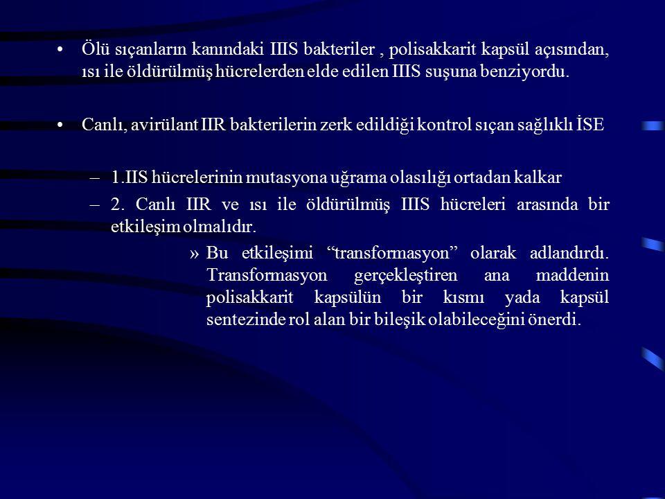 Ölü sıçanların kanındaki IIIS bakteriler , polisakkarit kapsül açısından, ısı ile öldürülmüş hücrelerden elde edilen IIIS suşuna benziyordu.
