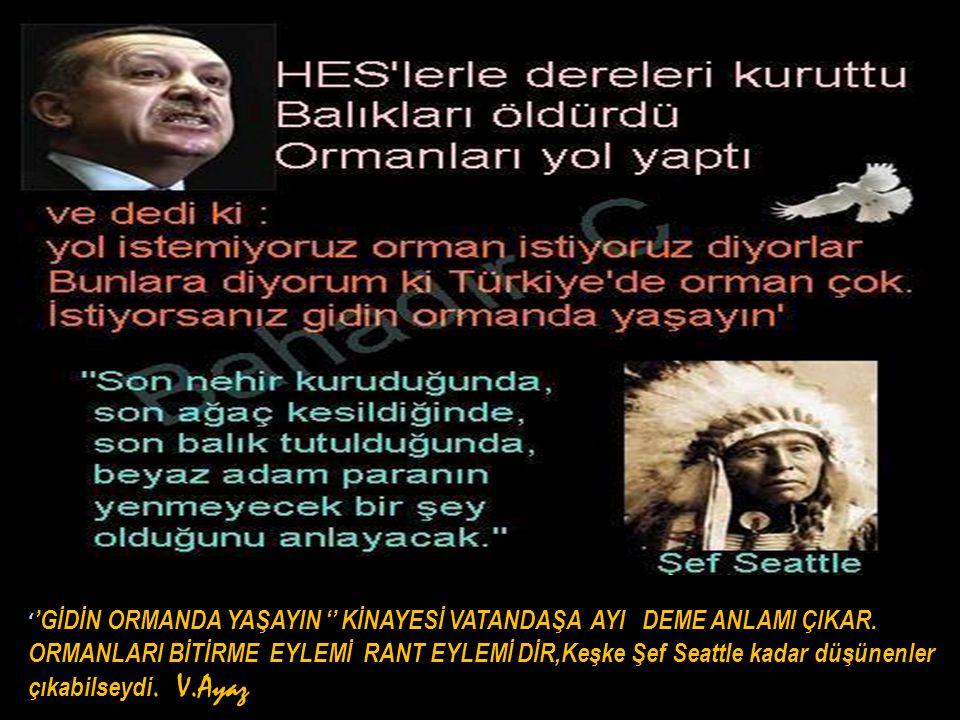 ''GİDİN ORMANDA YAŞAYIN '' KİNAYESİ VATANDAŞA AYI DEME ANLAMI ÇIKAR.