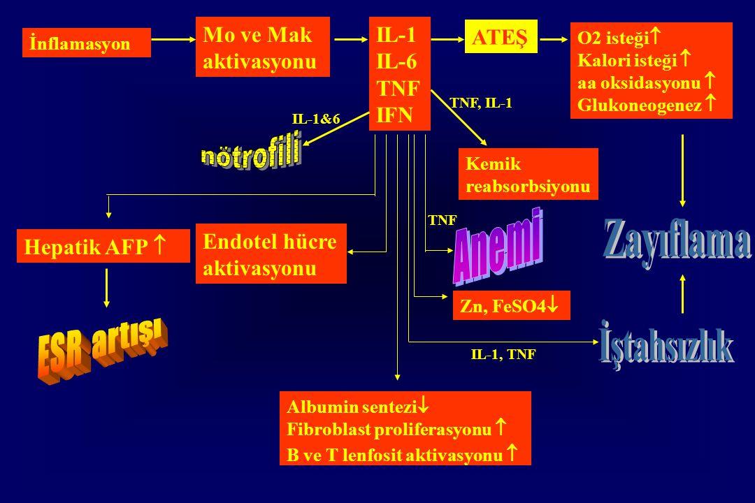 nötrofili Anemi Zayıflama ESR artışı İştahsızlık Mo ve Mak aktivasyonu