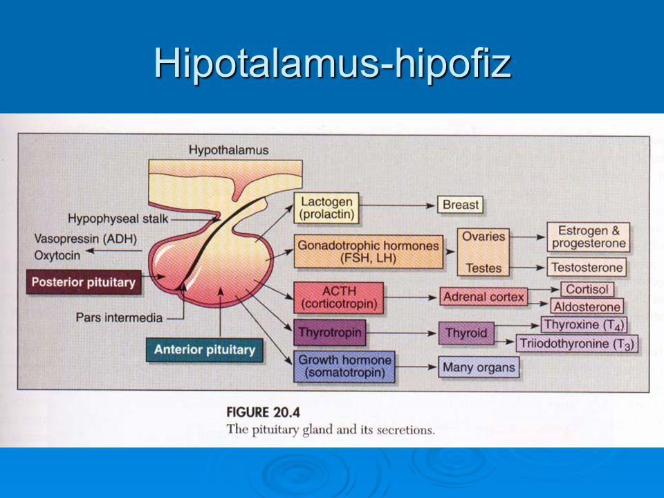 Hipotalamus-hipofiz