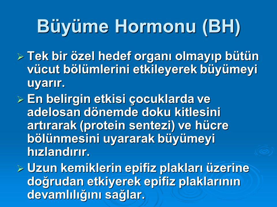 Büyüme Hormonu (BH) Tek bir özel hedef organı olmayıp bütün vücut bölümlerini etkileyerek büyümeyi uyarır.