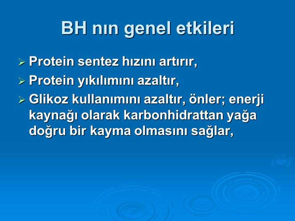 BH nın genel etkileri Protein sentez hızını artırır,