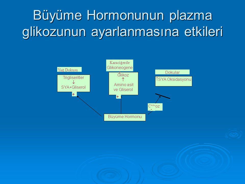 Büyüme Hormonunun plazma glikozunun ayarlanmasına etkileri