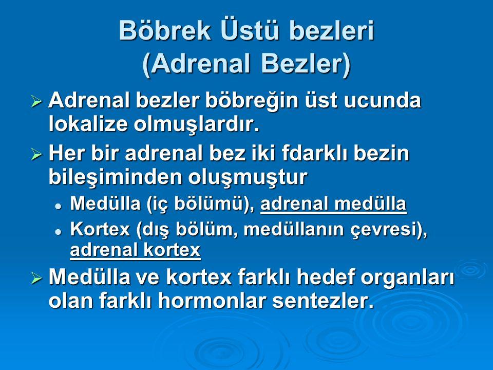 Böbrek Üstü bezleri (Adrenal Bezler)