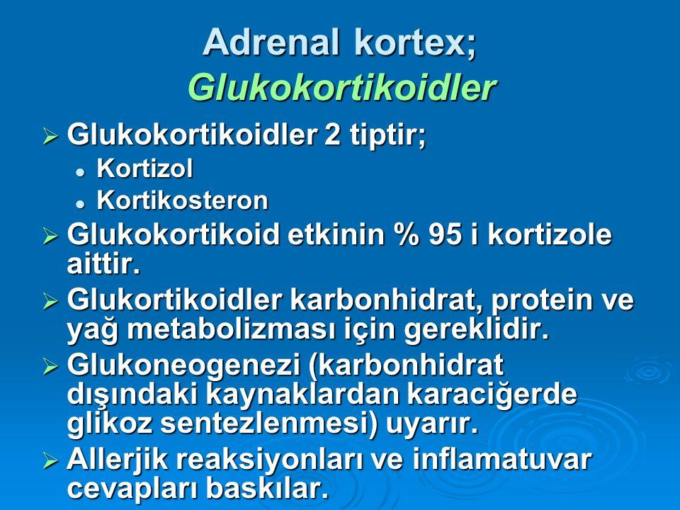 Adrenal kortex; Glukokortikoidler