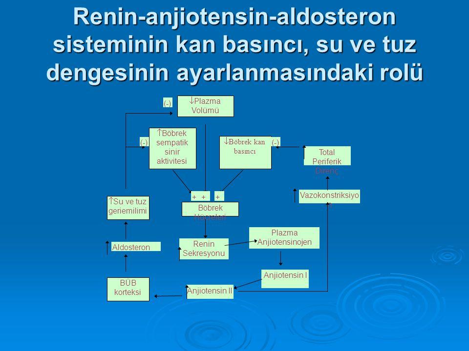 Renin-anjiotensin-aldosteron sisteminin kan basıncı, su ve tuz dengesinin ayarlanmasındaki rolü