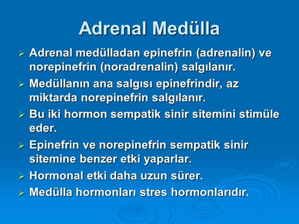 Adrenal Medülla Adrenal medülladan epinefrin (adrenalin) ve norepinefrin (noradrenalin) salgılanır.