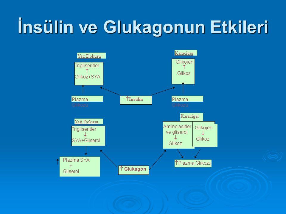 İnsülin ve Glukagonun Etkileri
